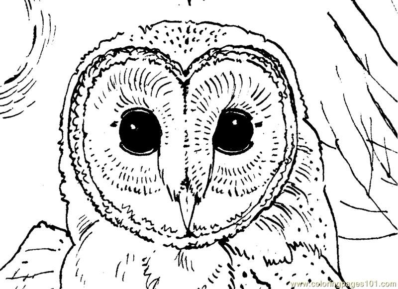 owl face printable coloring page for kids and adults - Cute Owl Coloring Pages Printable