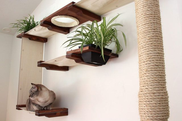 Build the perfect playground for your cats!   - Decoration #Build #Cats #decoration #perfect #Playground #CatPlayground #Cat #Playground