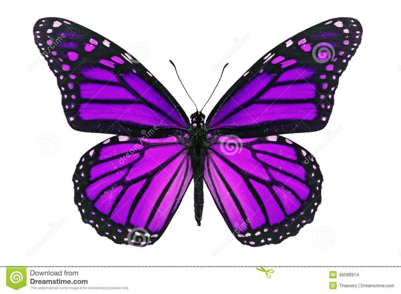 Purple Butterfly Stock Photo Image 46588914 Monarch Butterfly Tattoo Butterfly Painting Monarch Butterfly [ 953 x 1300 Pixel ]