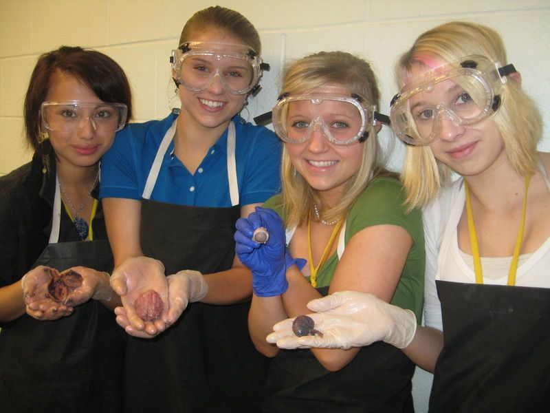 Summerville High School - Human Anatomy CP: 2(A) Group Pages - Cat ...
