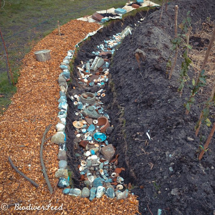 The Water-Purifying Storm Drain ... at BiodiverSeed ...