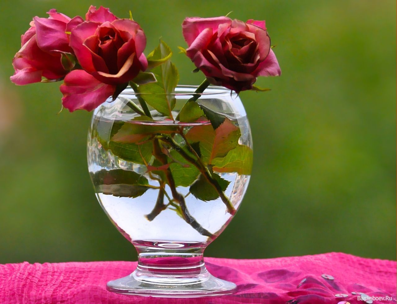 картинки розы в азе умерших должны храниться