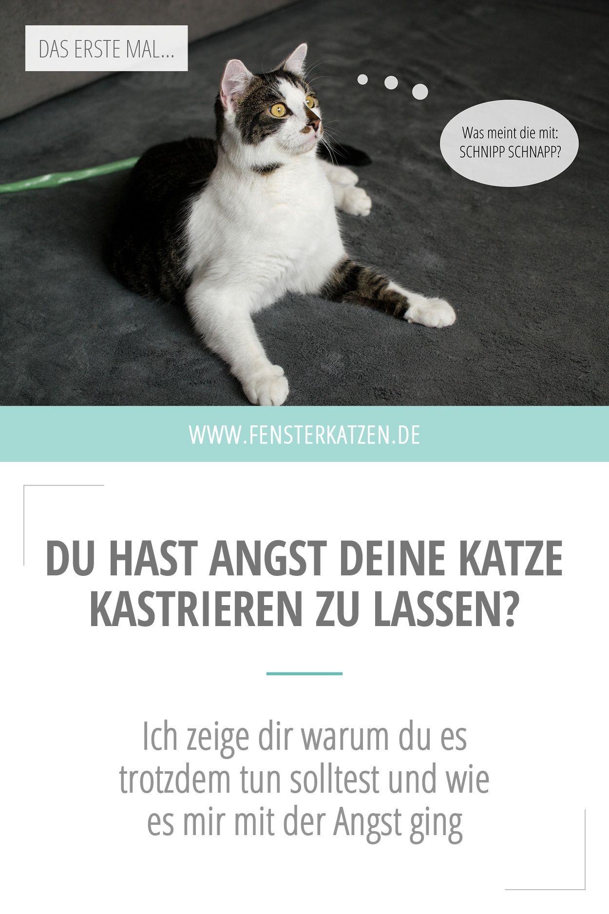 Eine Katze Kastrieren Lassen Das Erste Mal Katzen Katzenhaltung Tierarzt