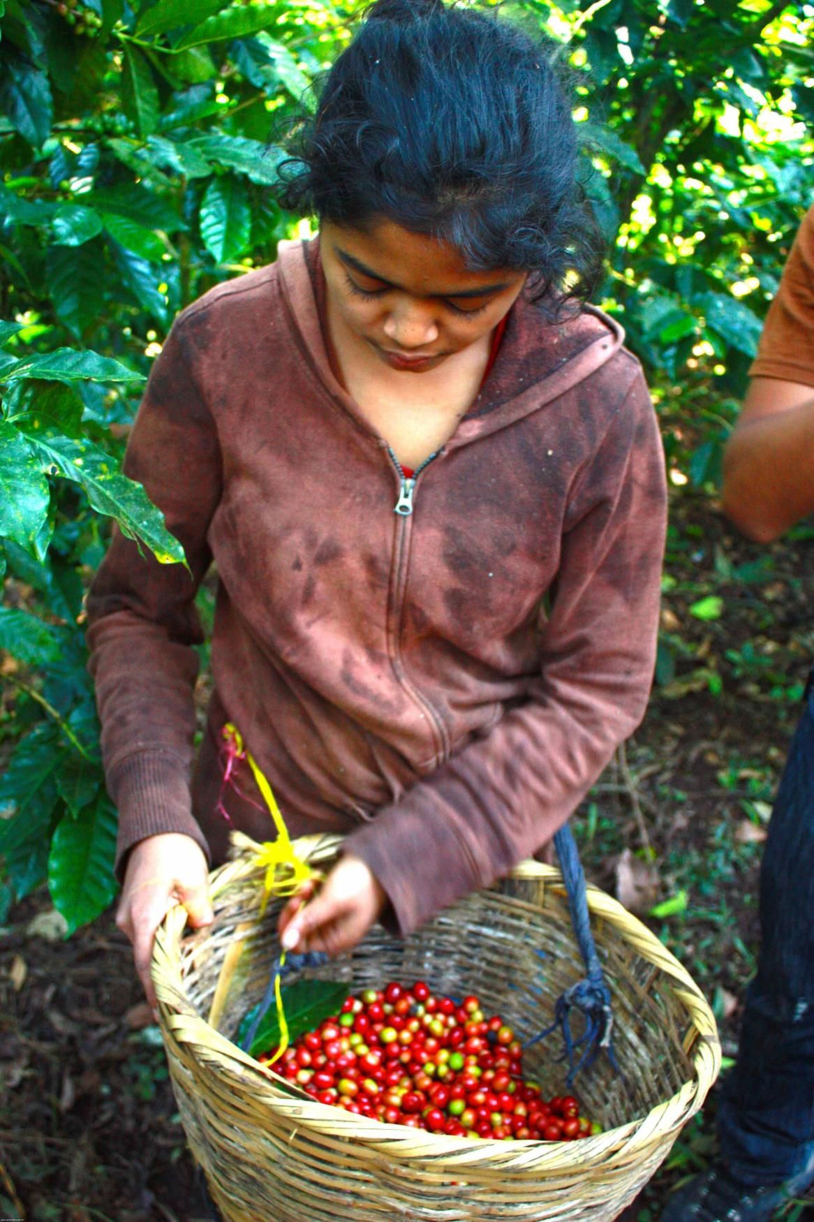 The Best of Matagalpa, Nicaragua's Coffee Country