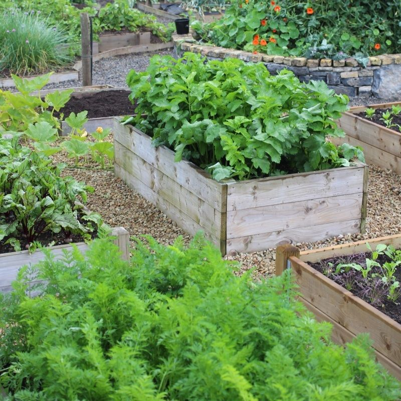 Timber Raised Vegetable Beds