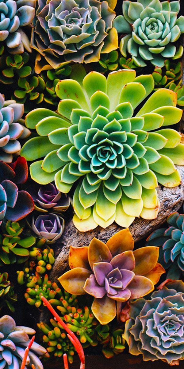 8EasytoCareforPlants Succulents wallpaper