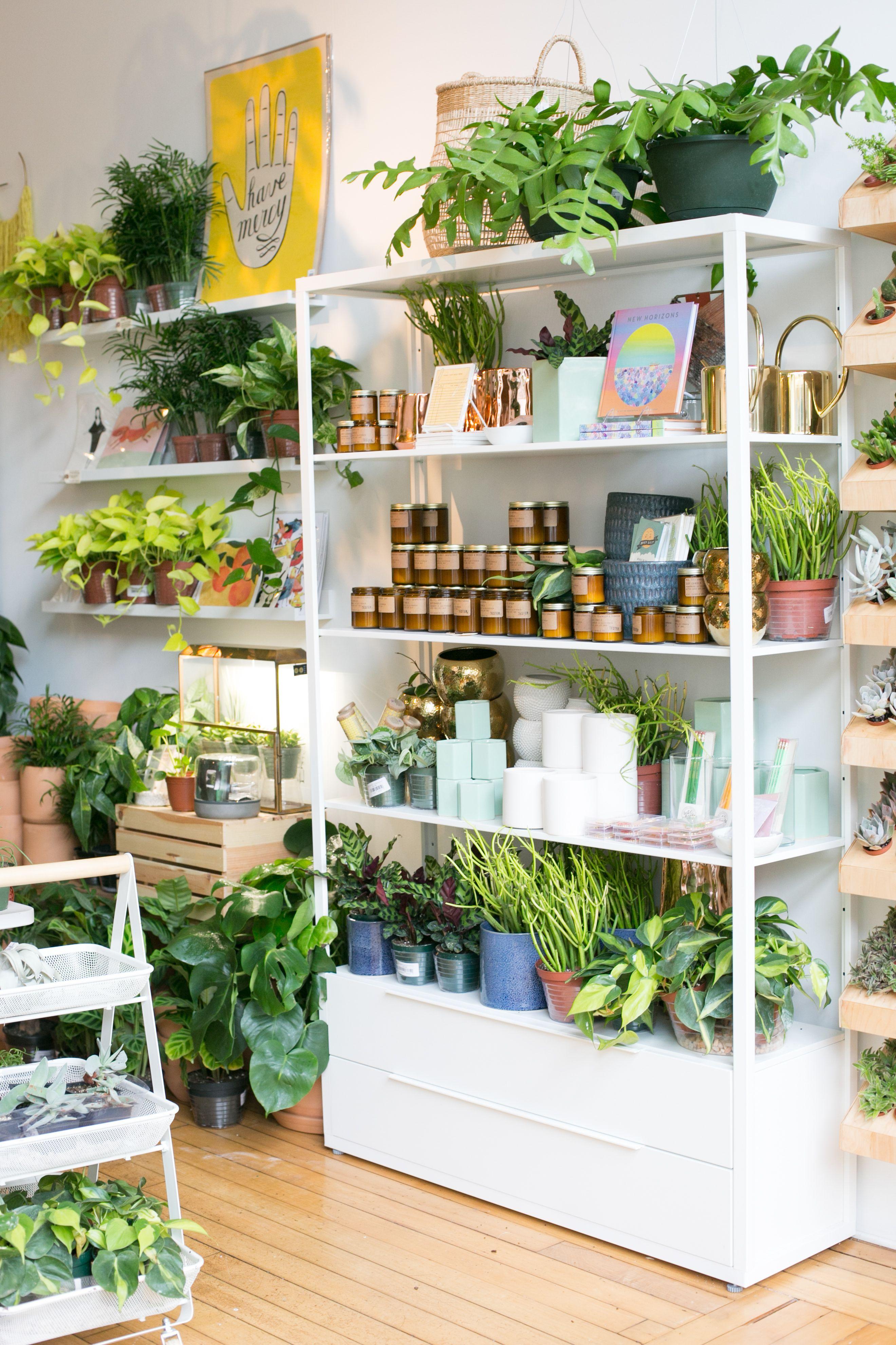 The Zen Succulent Plant Shop Corner Flower Shop Interiors