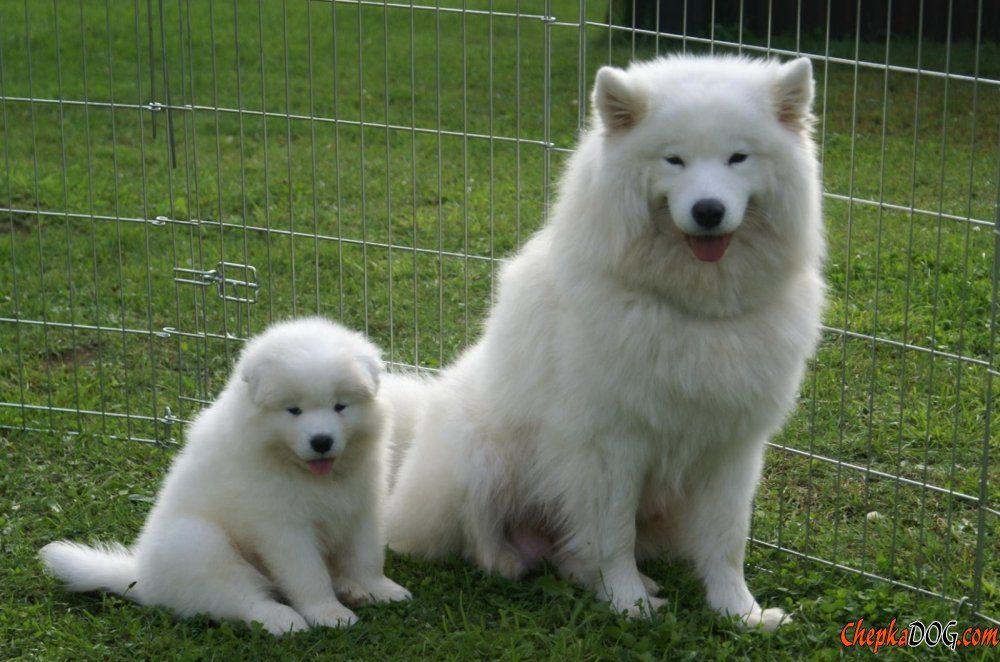 Seltene Hunderassen
