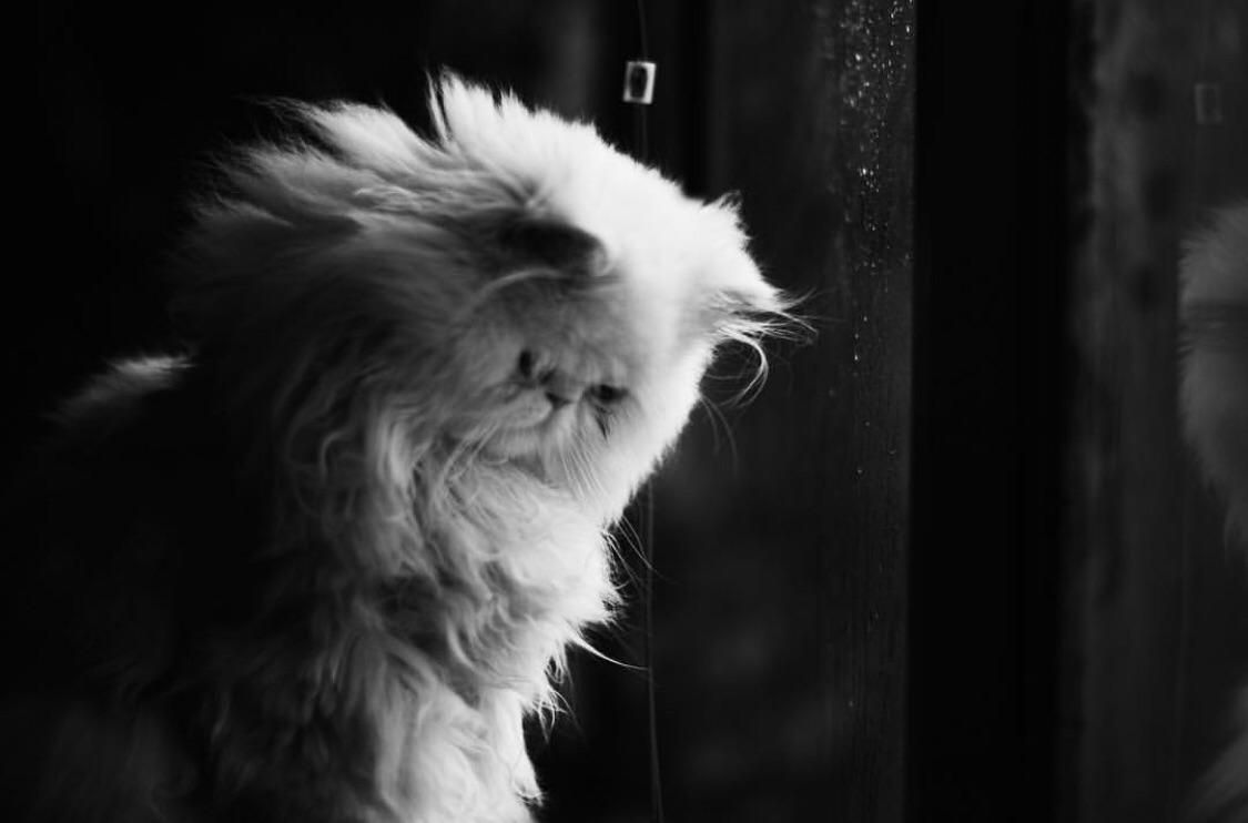 Photo By Grillo Villegas With Images Cute Cats And Dogs Funny Animals Cute Cats