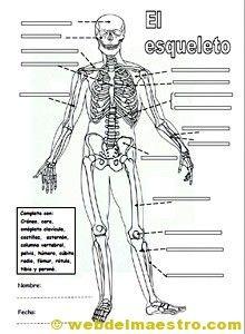 Sistema locomotor | Sistema muscular para niños, Sistemas del ...