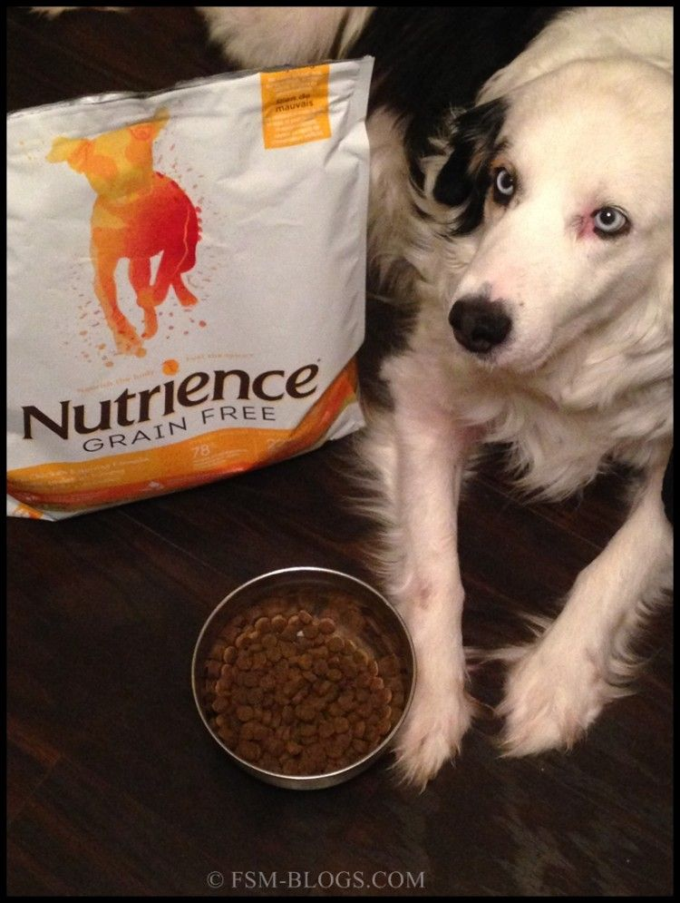 Keep Your Pet Healthy And Active With Nutrience Pet Food