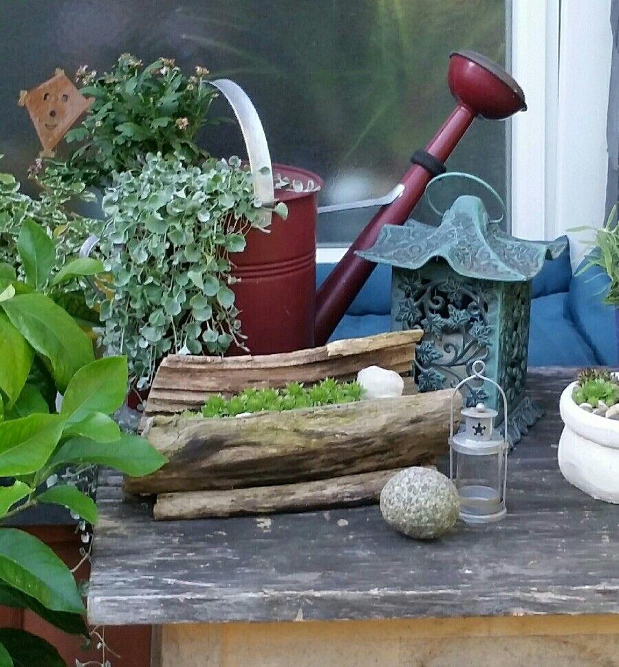 Alte Giesskanne Bepflanzen Giesskanne Garten Inspiration