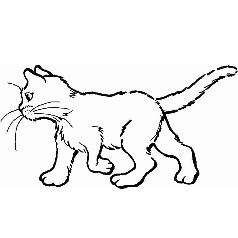 Coloriage Chat Tachete.Coloriage Chat A Colorier Dessin A Imprimer Dessin Cats