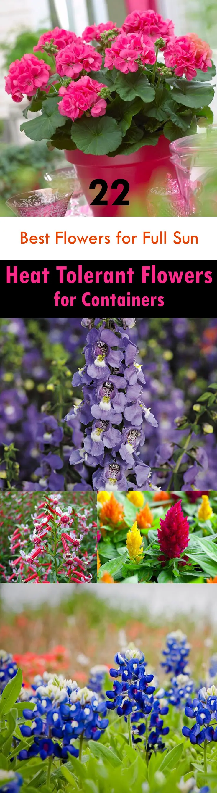 Photo of 22 Best Flowers for Full Sun | Heat Tolerant Flowers for Containers