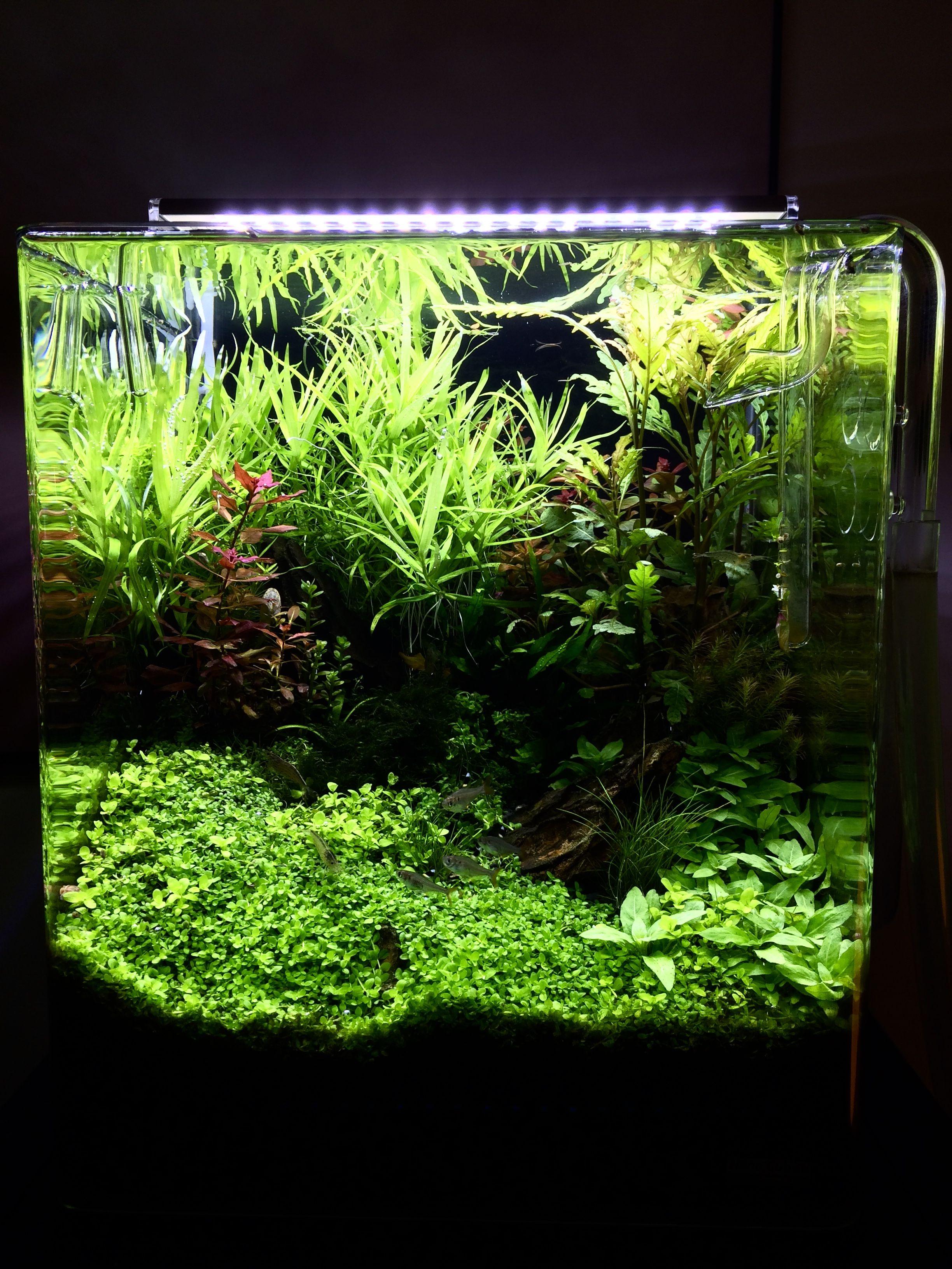 Aquascape 30 Liter ,Marcel engbers | Aquascape, Planted ...
