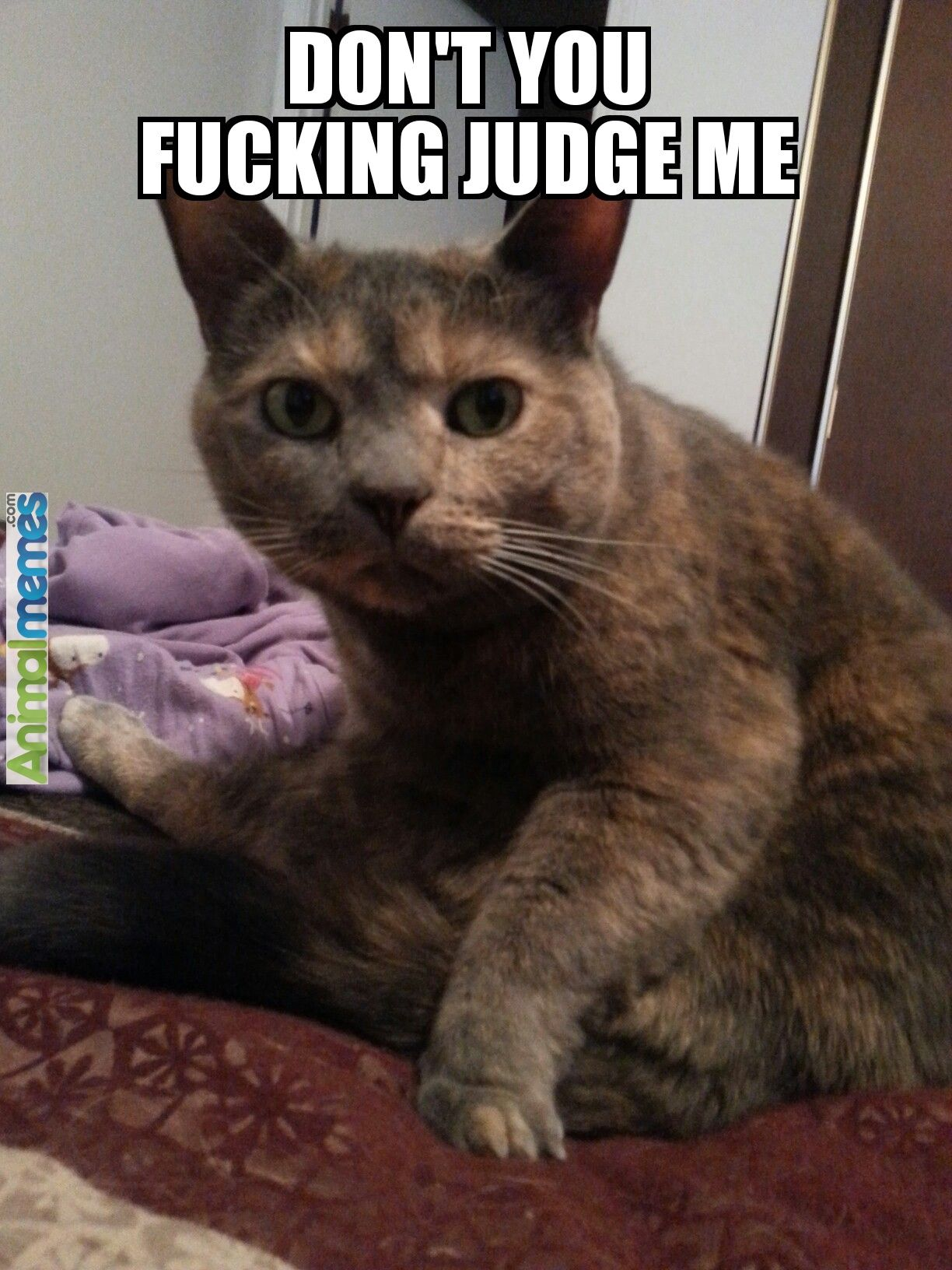 58e7c1000afa81dd3441c3a145b4fb7e cat memes don't judge me cat memes pinterest memes,Don T Judge Me Meme
