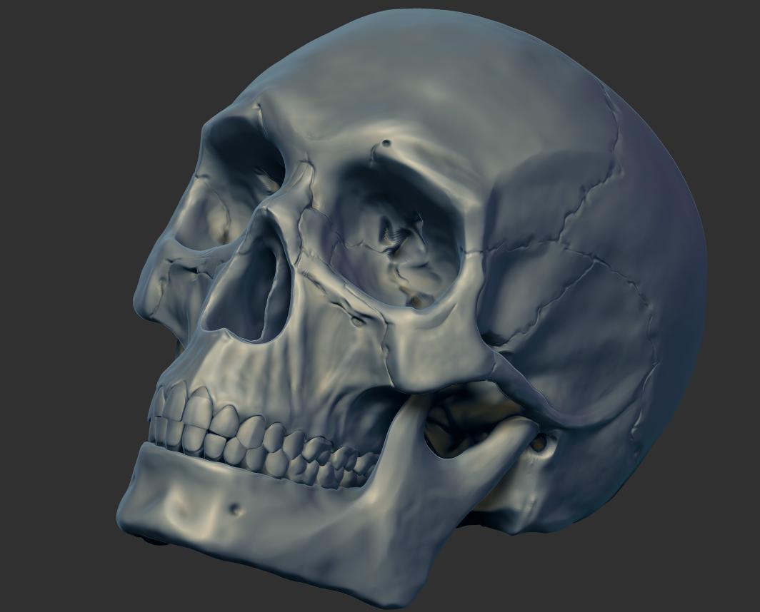 Human Skull Human Skull Skull Human
