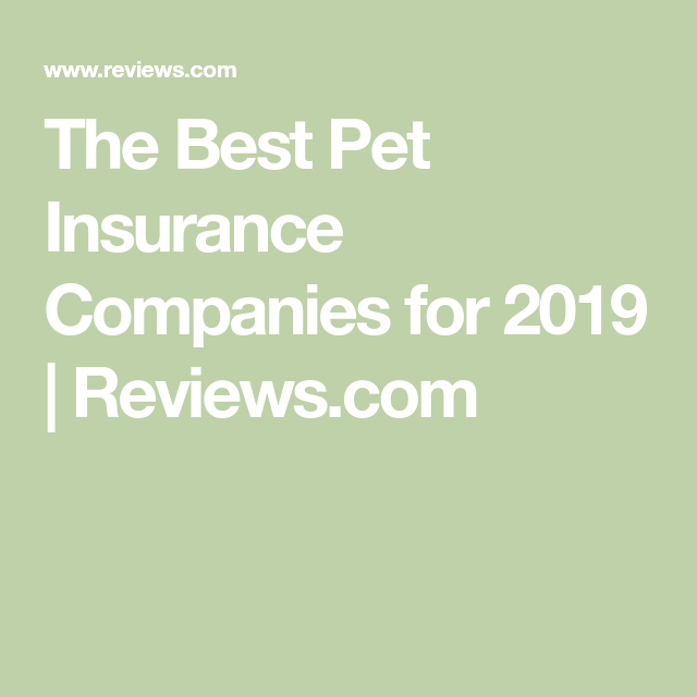 The Best Pet Insurance Best Pet Insurance Pet Insurance Pet