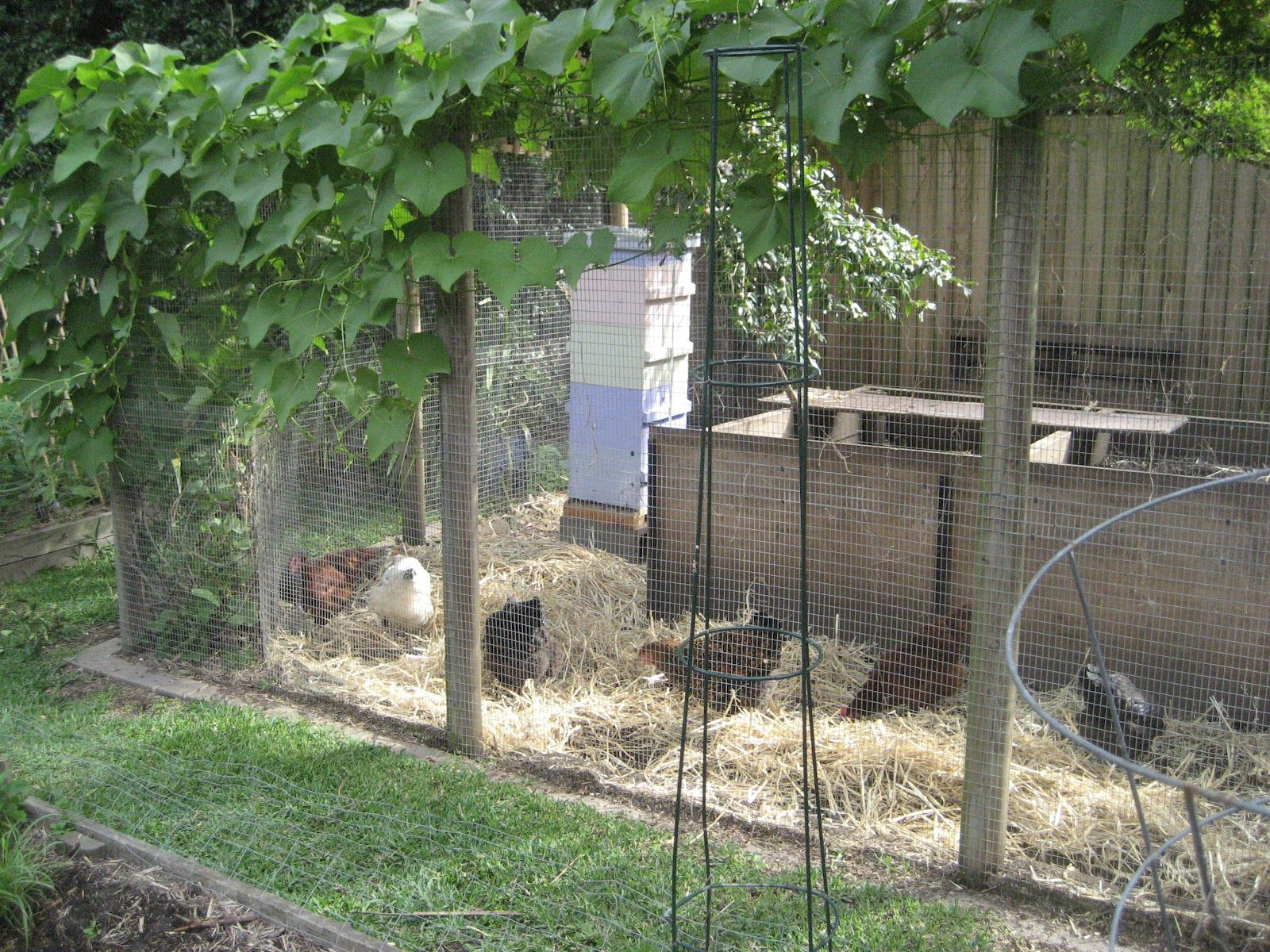 chook shed google search chook sheds pinterest cubby houses