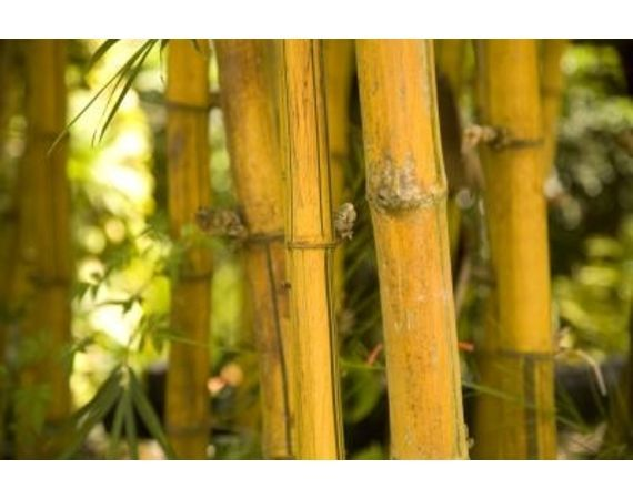How To Make Faux Bamboo Out Of PVC   EHow