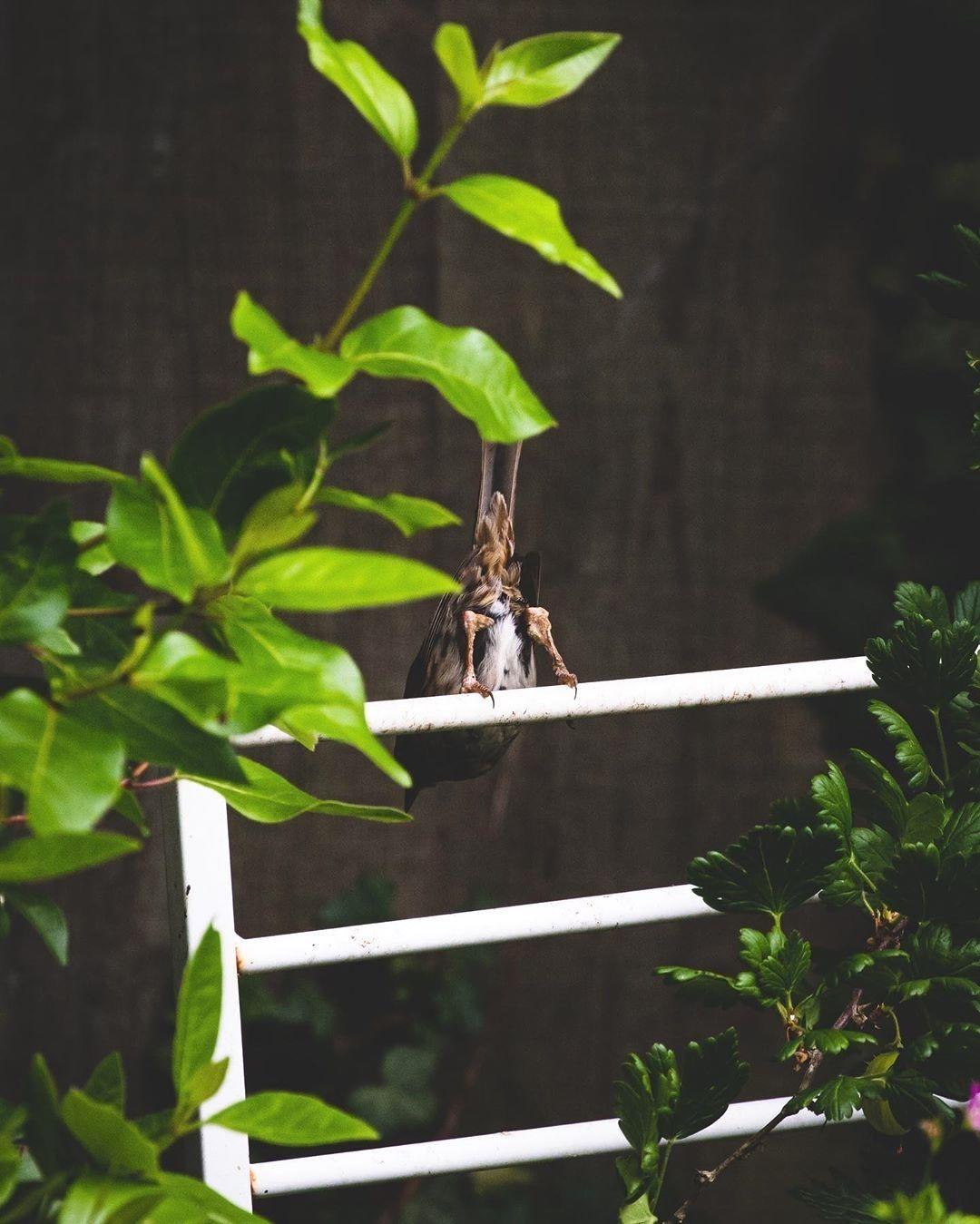 Lovely... thanks for that 😂 #bird #birdphotography #photo #photography #canonphotography #canonphotography