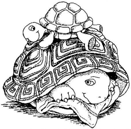 Schildkroten Ausmalbilder #schildkröte #ausmalen #