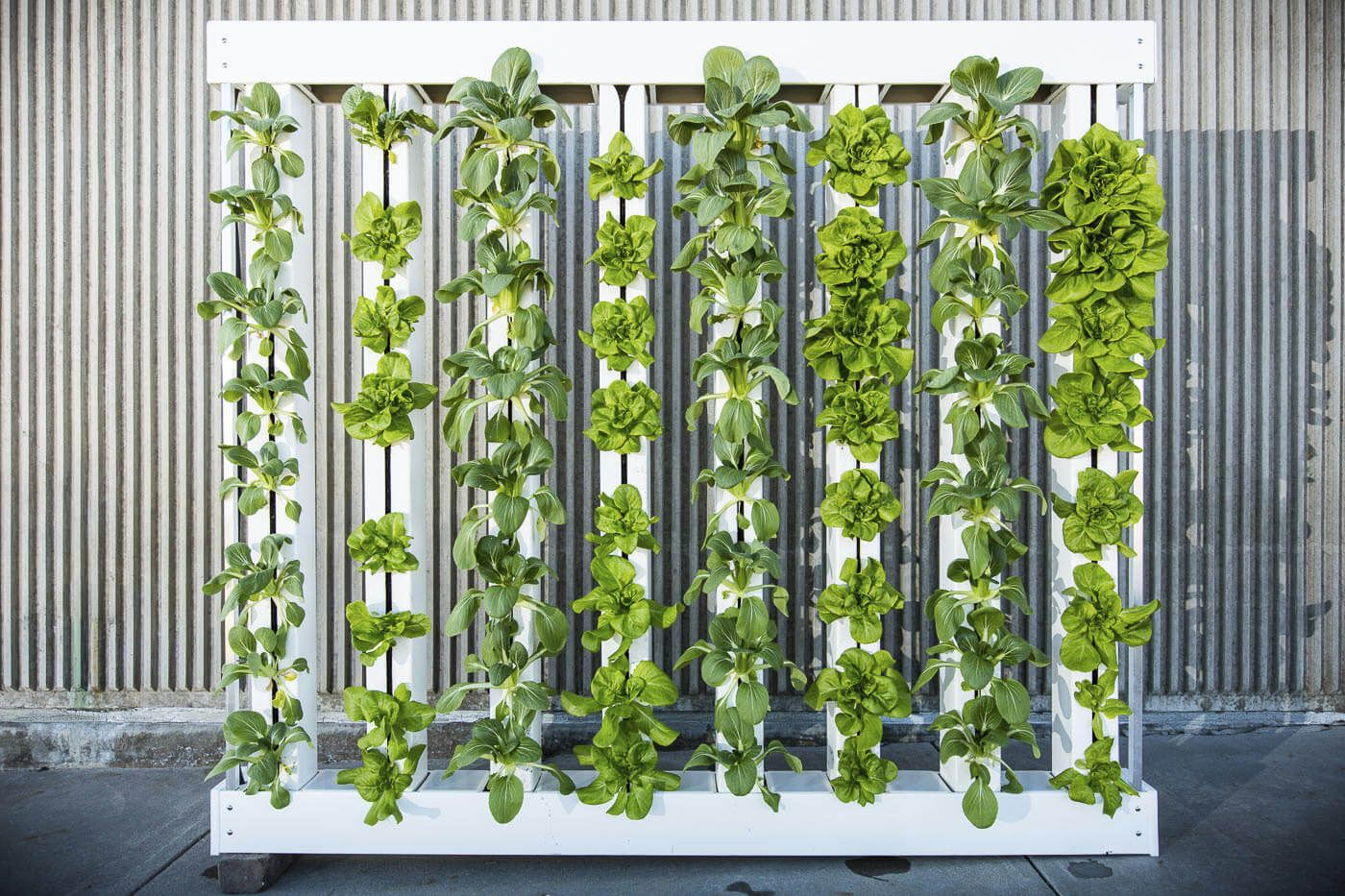 Image result for hydroponic wall Vertical farming, Fence