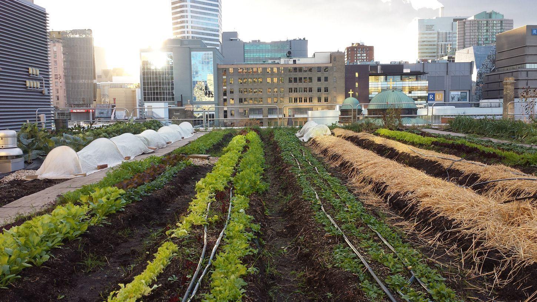 http://www.greenroofs.com/projects/ryerson_urban_farm ...