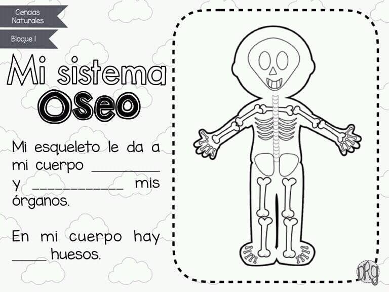 Sistema Oseo. Trabajo escolar | Los cinco sentidos | Pinterest ...