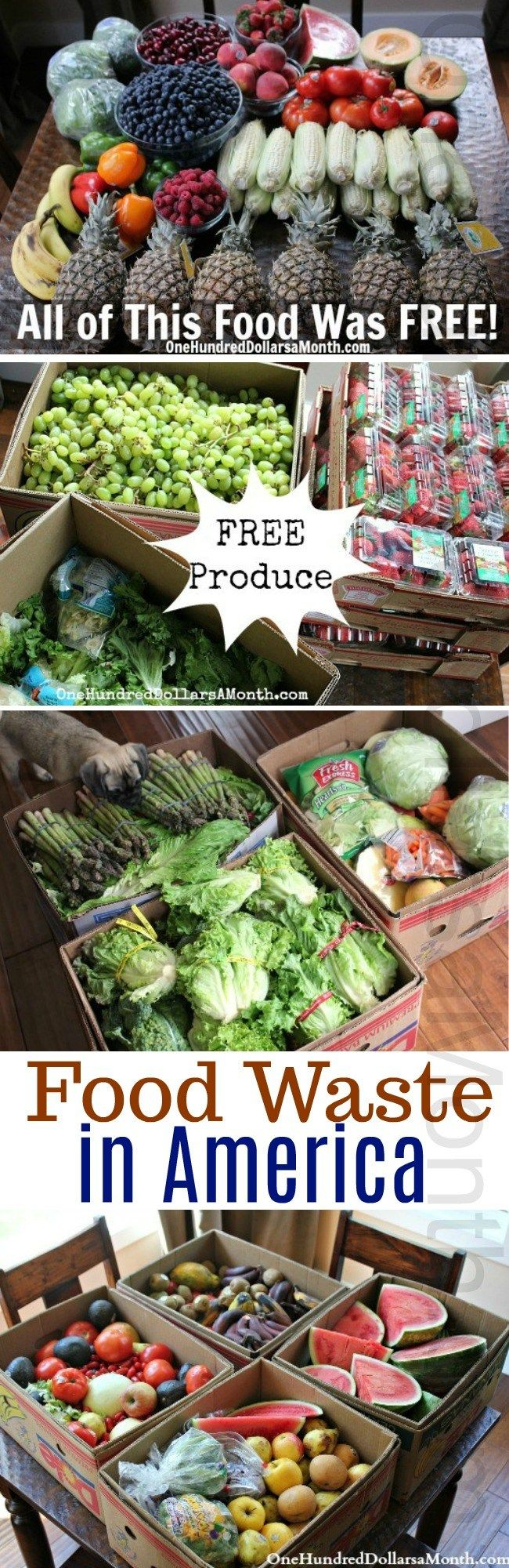 Food Waste In America Round Up One Hundred Dollars A Month Food Waste Food Free Food