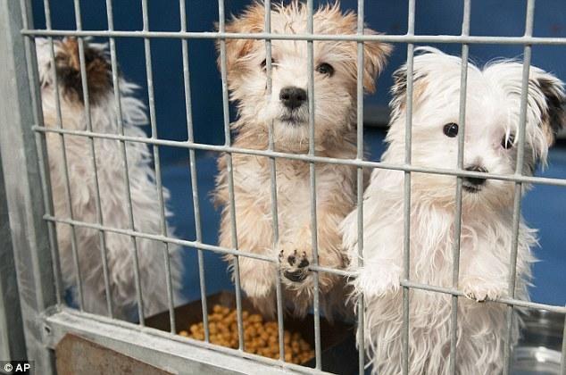 Una ley obliga a vender animales sólamente RESCATADOS