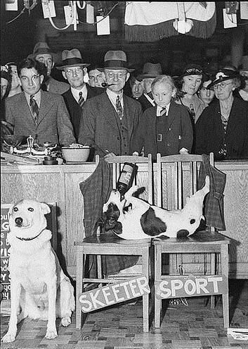 Skeeter,the beer drinking #dog (1954)