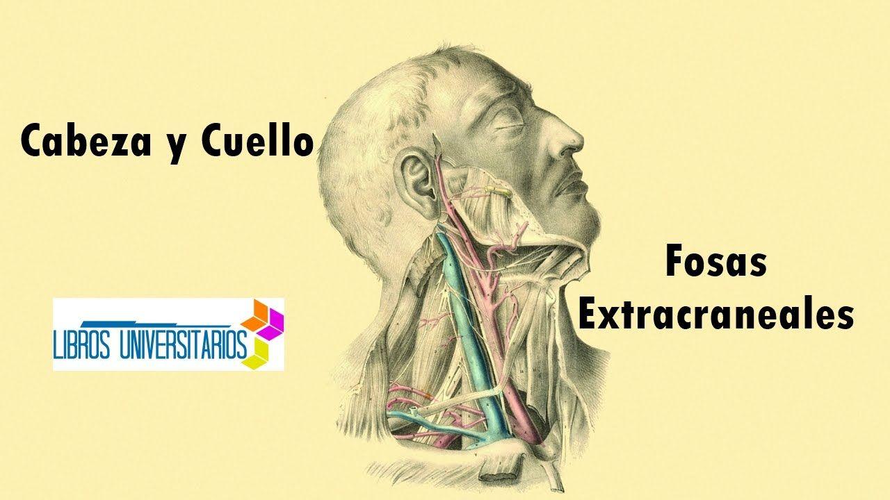 Anatomia - Craneo: Fosas Extracraneales | libros | Pinterest ...