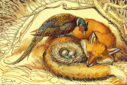 AFFP Fox & Pheasant Fox art, Fantastic mr fox