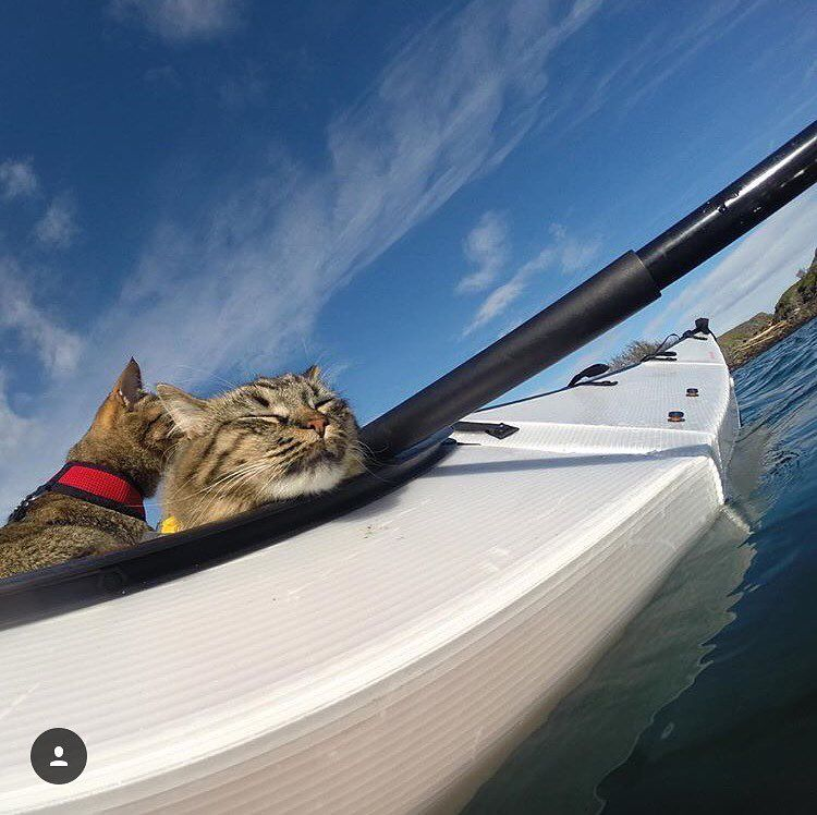"Adventure Cats on Instagram: ""Hope you're enjoying a relaxing #Caturday. AdventureCats.org #AdventureCats by @boltandkeel."""