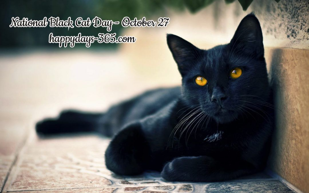 National Black Cat Day October 27 A Fairy Known As The Cat Sith In Celtic Mythology Takes The Form Of A Black Cat Revenge Of Cute Black Cats Black Cat Cats