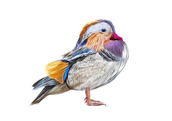 Mandarin Duck  @creativework247