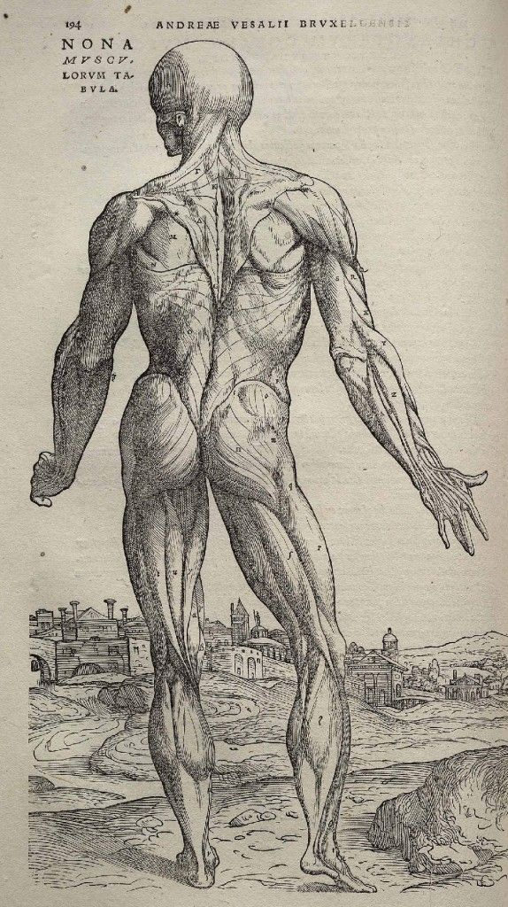 WOUNDS AND RITUAL SACRIFICES | Pinterest | Andreas vesalius, Anatomy ...