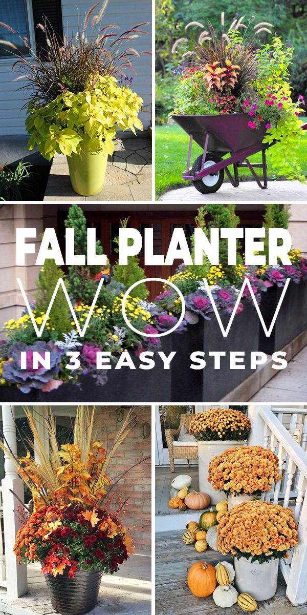 Fall Planter Wow in 3 Easy Steps Fall Planter Ideas  Wow in 3 Easy Steps  Create some wow with your fall planters and garden containers with these great ideas and tips