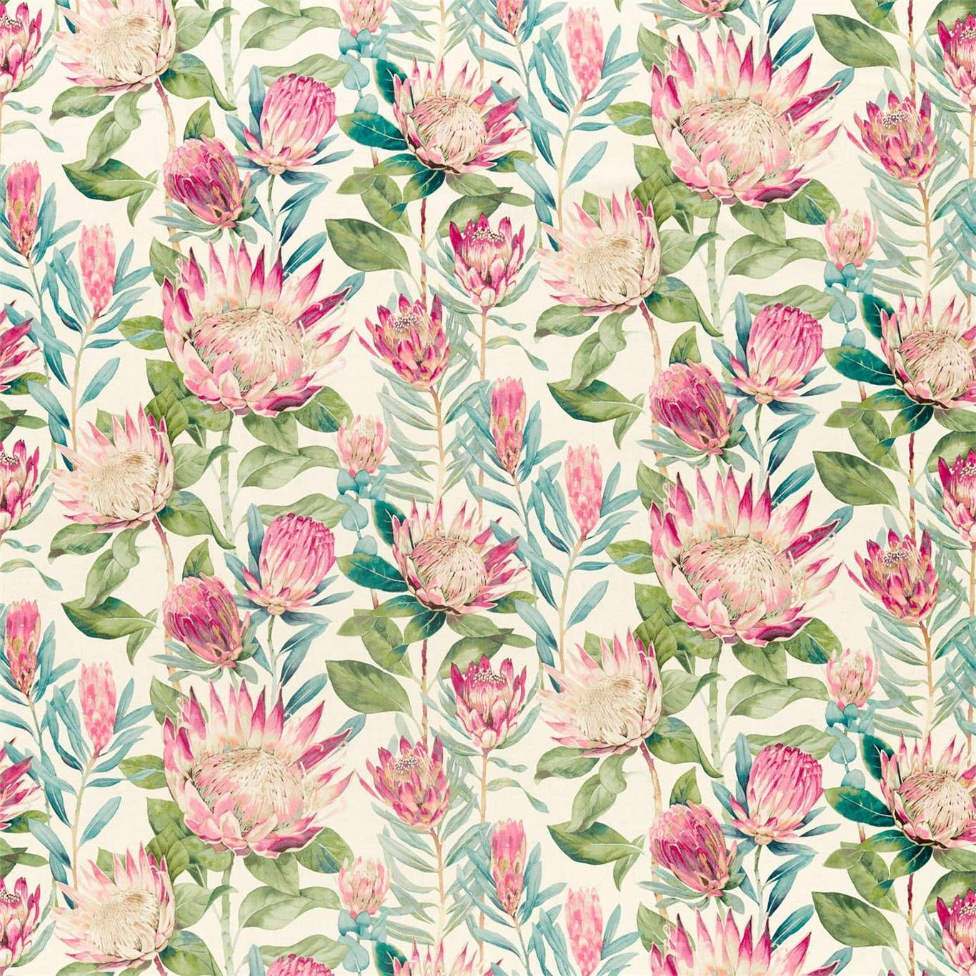 King Protea 226573 In 2020 King Protea Cream Wallpaper Protea Flower