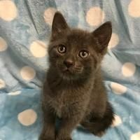 Available pets at Wright-Way Rescue in Morton Grove, Illinois #mortongrove Available pets at Wright-Way Rescue in Morton Grove, Illinois #mortongrove