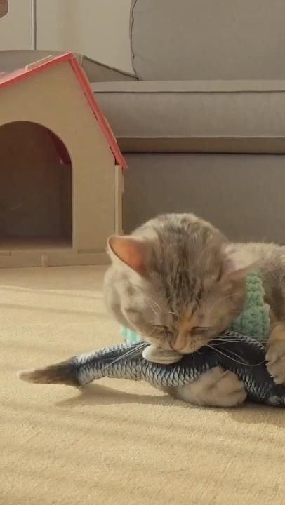 🙀 This toy is like a real fish! Your cat will love