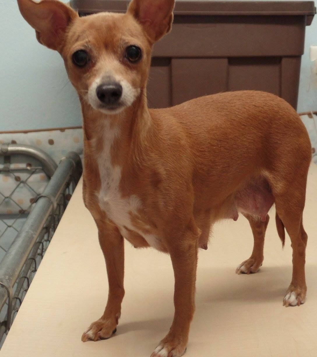meet lolly - an adoptable pet dog   rescue & adopt our animals