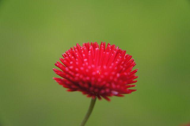 Hot pink & green, #hotpink, #flower