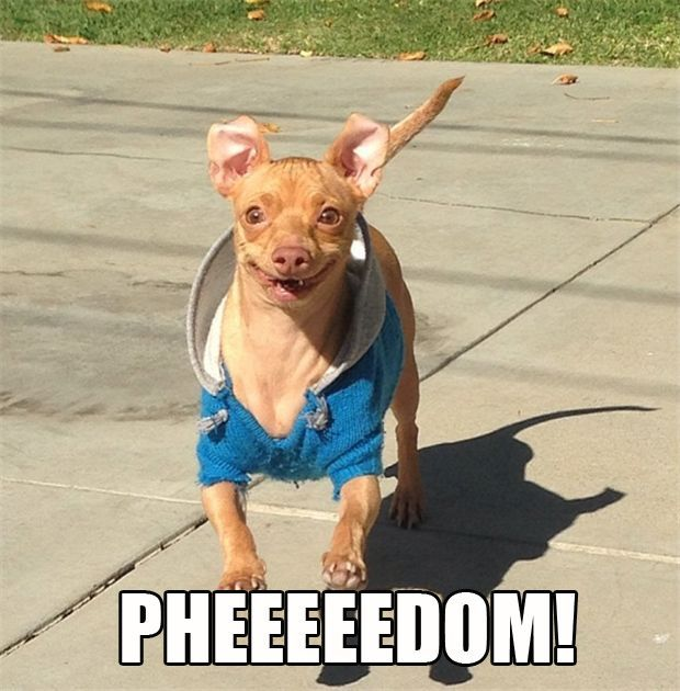 Tuna (Phteven) Is The Funniest Dog On The Internet 20 Pics ... - photo#33
