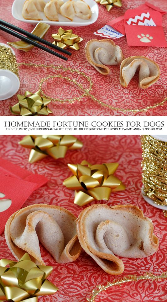 Recipe Chinese New Year Dog Fortune Cookie Dog Cookies Food