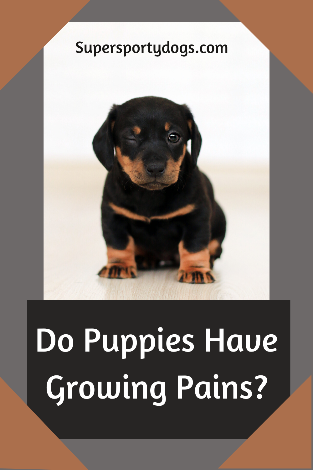 Do Puppies Have Growing Pains In 2020 Puppies Best Small Dogs Best Small Dog Breeds