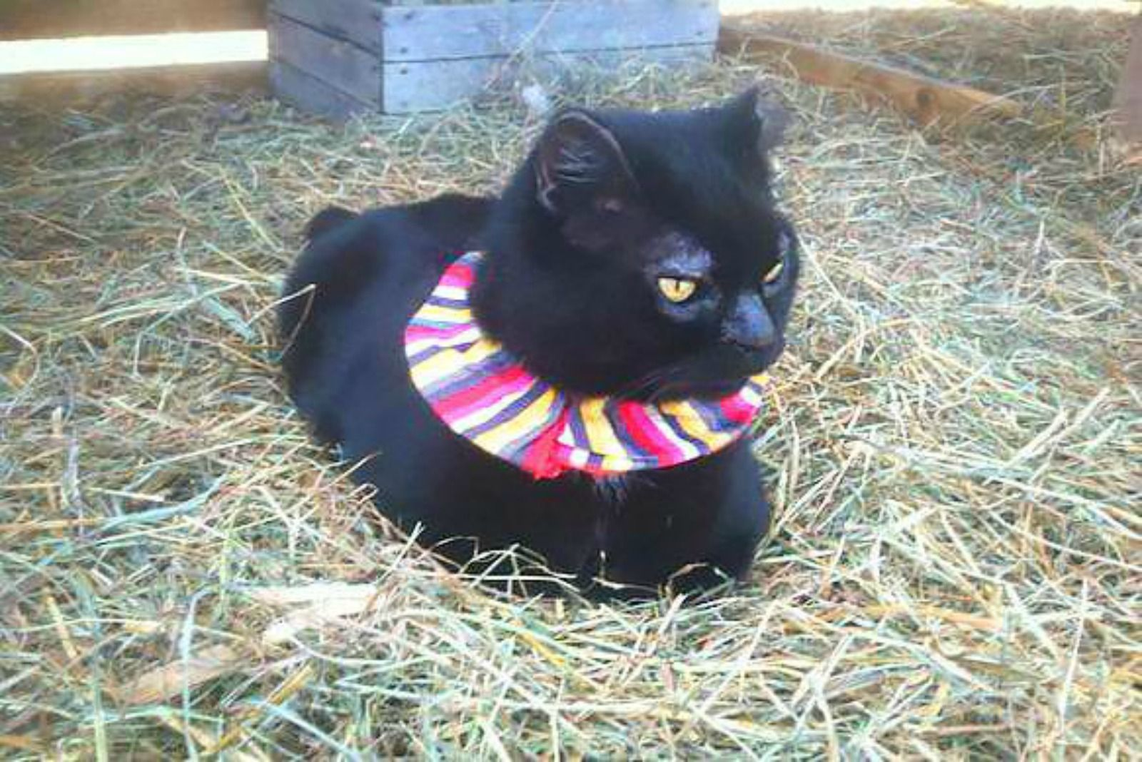 The Weird and Amazing Way Putting Scrunchies on Cats Saves