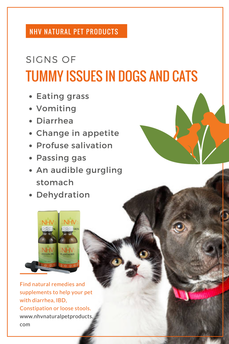 Signs Of Tummy Issues In Dogs And Cats Herbal Formulas To Help With Digestions Metabolism Appetite Diarrhea Cons Natural Pet Cat Eating Grass Pet Remedies
