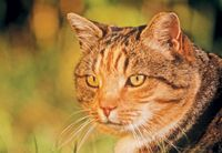 CVC Highlight: 8 tips to make life easier for owners of diabetic cats - Veterinary Medicine